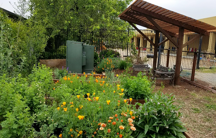 Springfield Montessori - Walnut Creek > Academics > Gardening